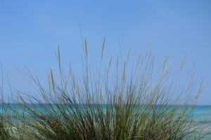 Blick aus dem Dünengras auf den Strand von Estrenc