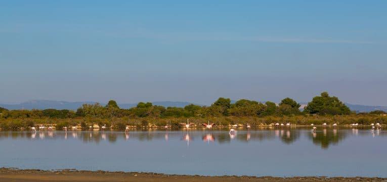 Flamingos in den Salinen von Ses Salinas
